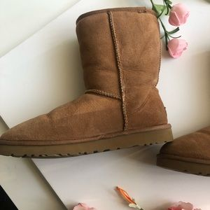 UGG Shoes - Classic Short Brown UGGs